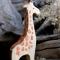 Жираф фигурка для детей